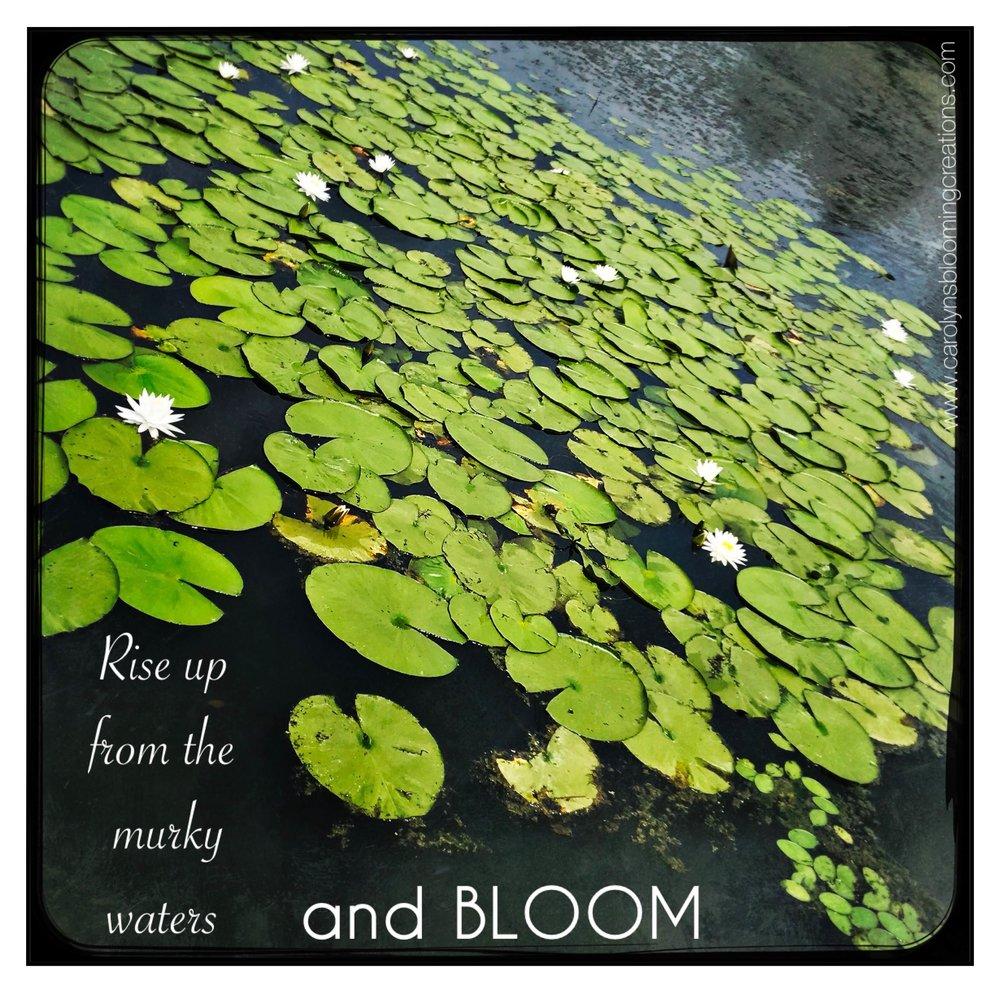 Carolyn Braden Rise and Bloom.jpg