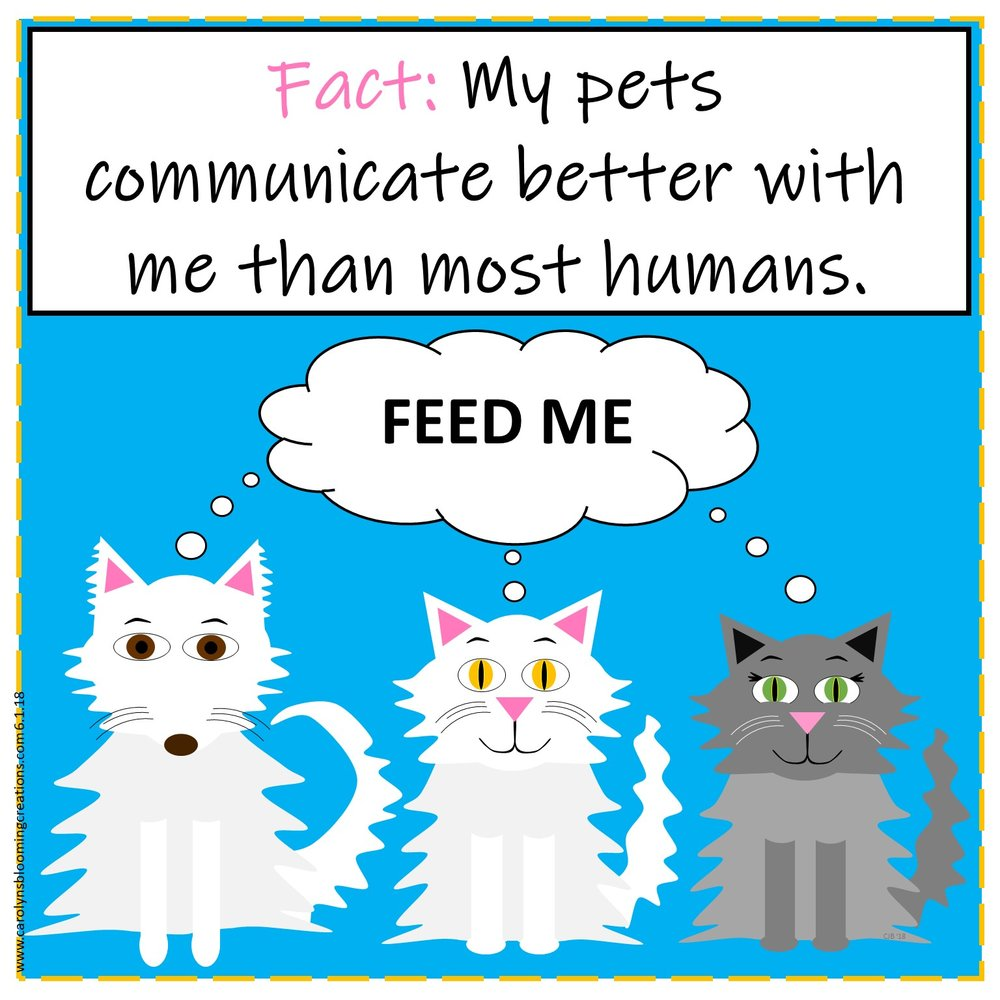 Carolyn Braden Bad Communication friday funny cats.jpg