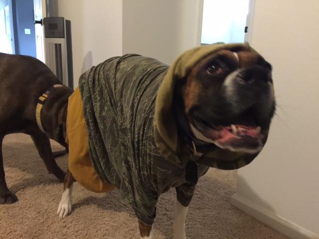 Ducky ikledd høstens farger. Vi har IKKE for vane å kle ut hundene. Et engangstilfelle som ikke skal gjentas. Men fin var hun. Det synes ihvertfall Drago.