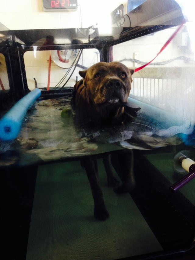 Rehab etter en ulykke og påfølgende operasjon. Han går på tredemølle med - som du kan se - vann :)
