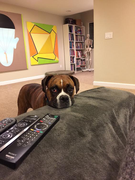 TV i kjellerstuen (med verdens mest irriterende teppe. På sikt ønsker jeg meg parkett i hele huset. Hunder + vegg-til-vegg-tepper? Ingen god match!)