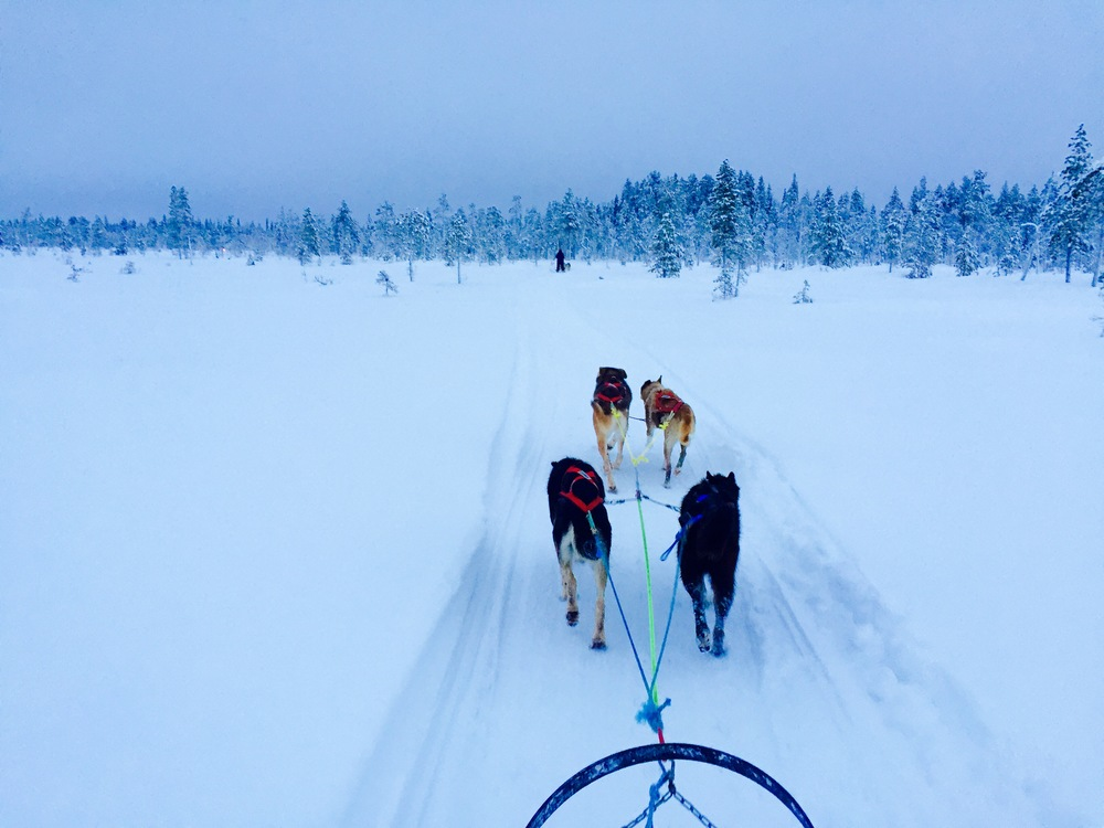 Full day husky safaris in Ylläs.jpeg