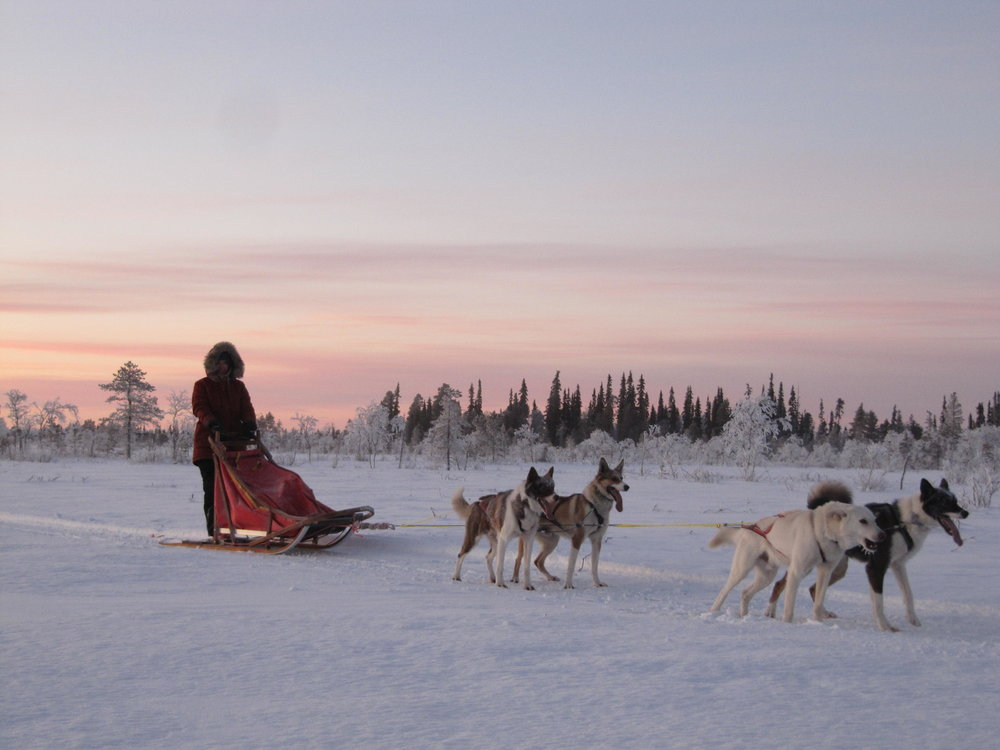 Husky safari in Ylläs.jpg