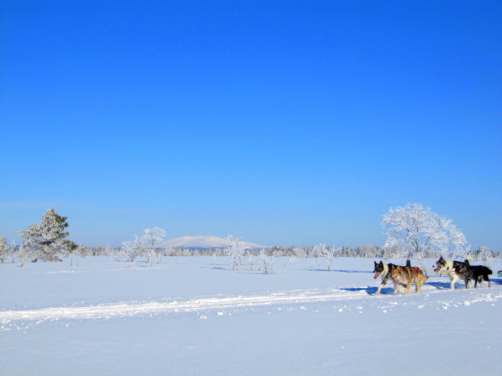 Dogsledding in Ylläs, Lapland.JPG