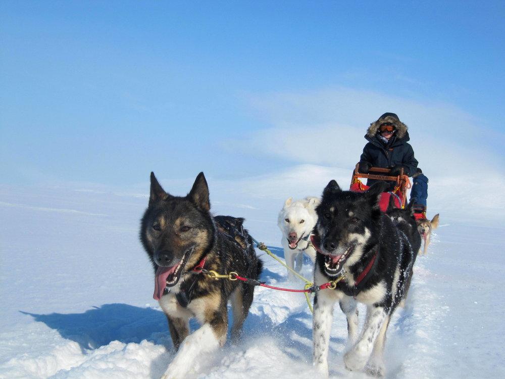 Multi-day Husky adventure in Lapland.JPG