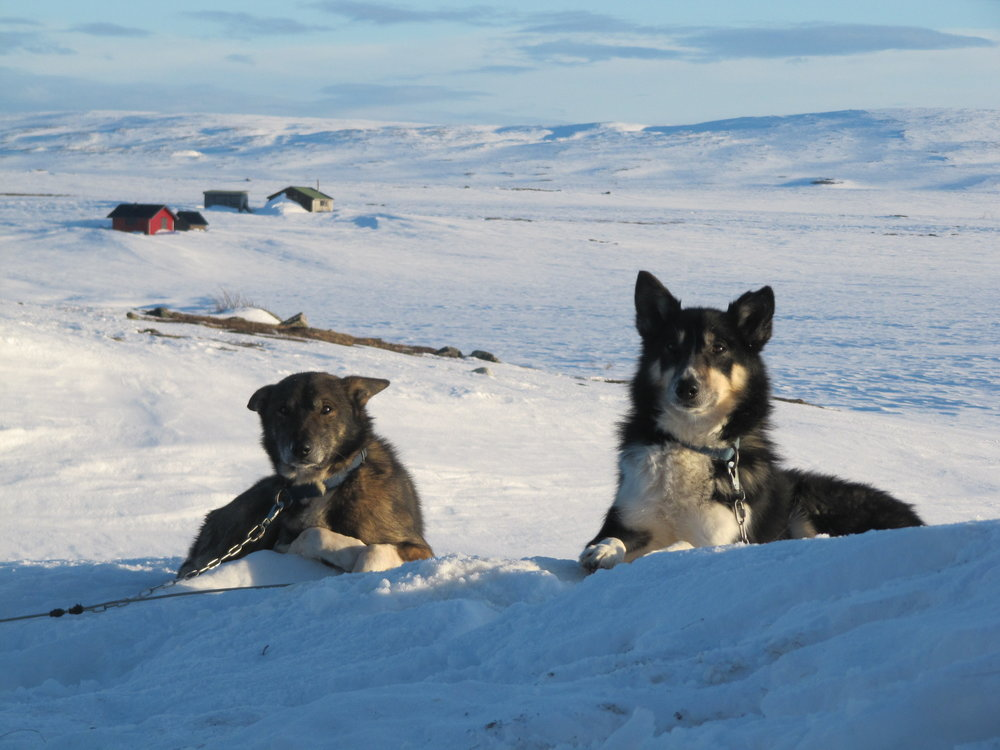 Sleddogs on a multi-day husky adventure in Lapland.JPG