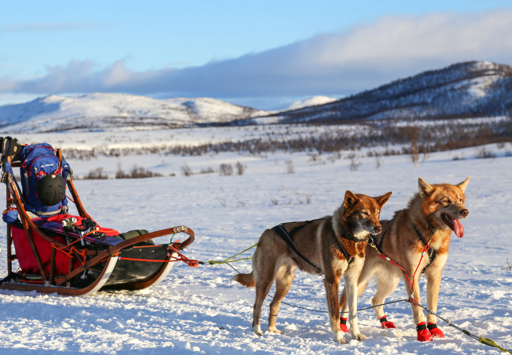 Multi-day husky safari in arctic tundra.jpg