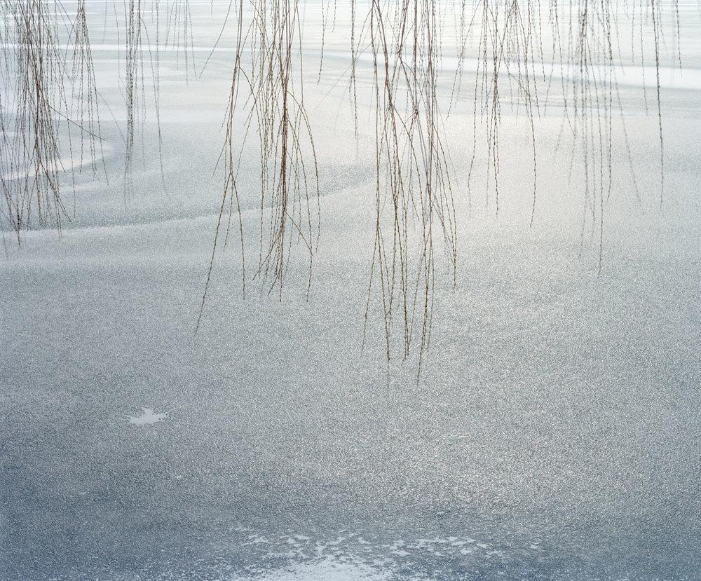 Reeds (2006)