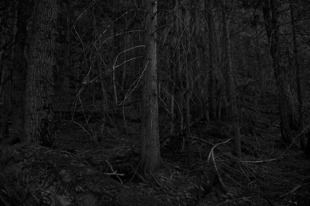 Thicket (2013)