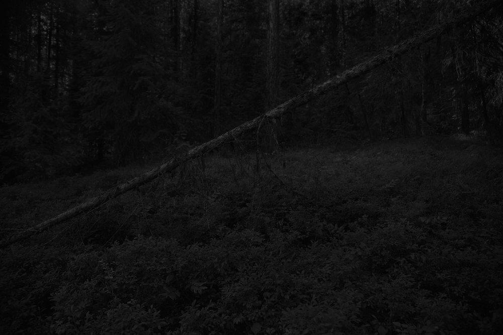 Oblique (2013)