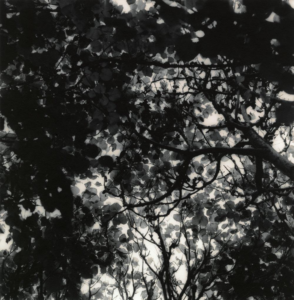 Autumn (2010)