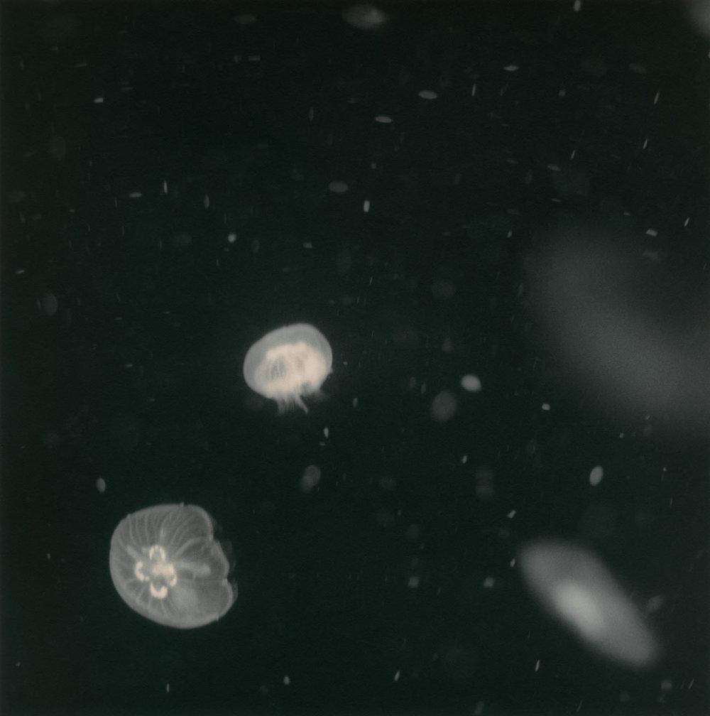 Cosmos (2010)