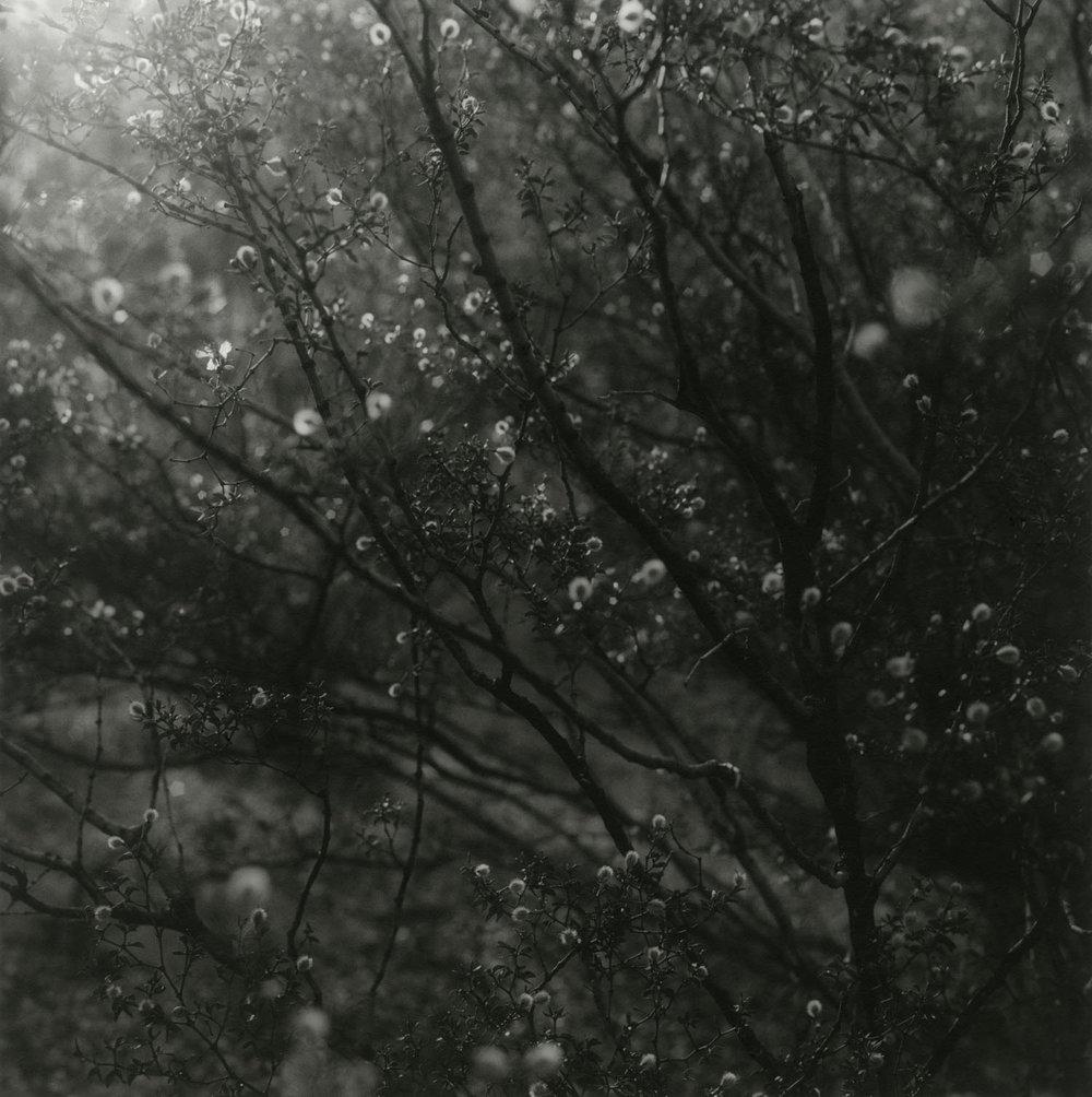 Iluminated (2010)