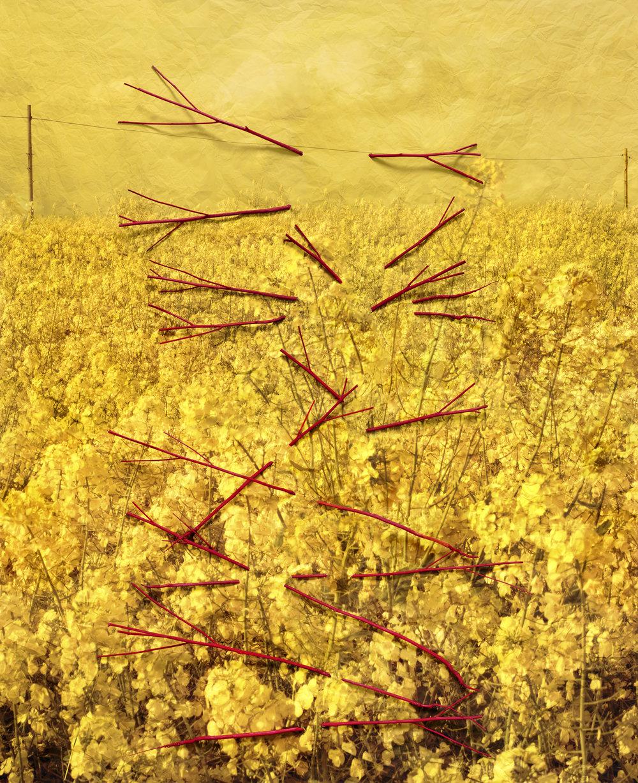 Caetera Fumus (2015