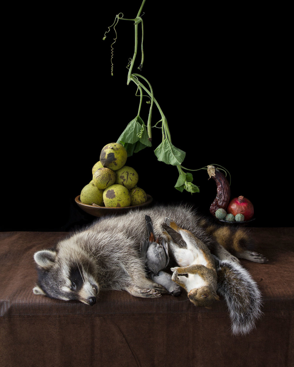 On Ripeness and Rot #10 (Raccoon) (2013)