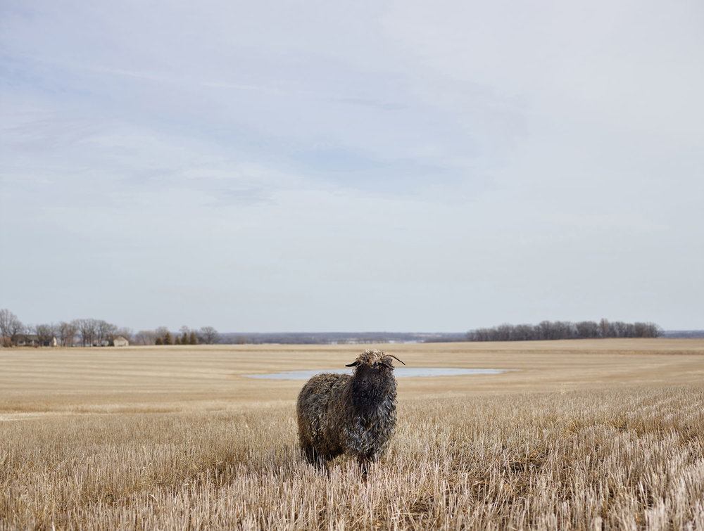 CURLY, OTTER TAIL COUNTY, MINNESOTA, USA (2015)