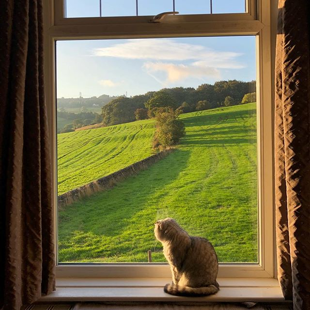 @arwen_the_cat enjoying the morning light. . . . #scottishfold #silvertabby #scottishfoldlovers #catsofinstagram #cat #morning #sunrise #catstagram #roomwithaview #sun #sunshine