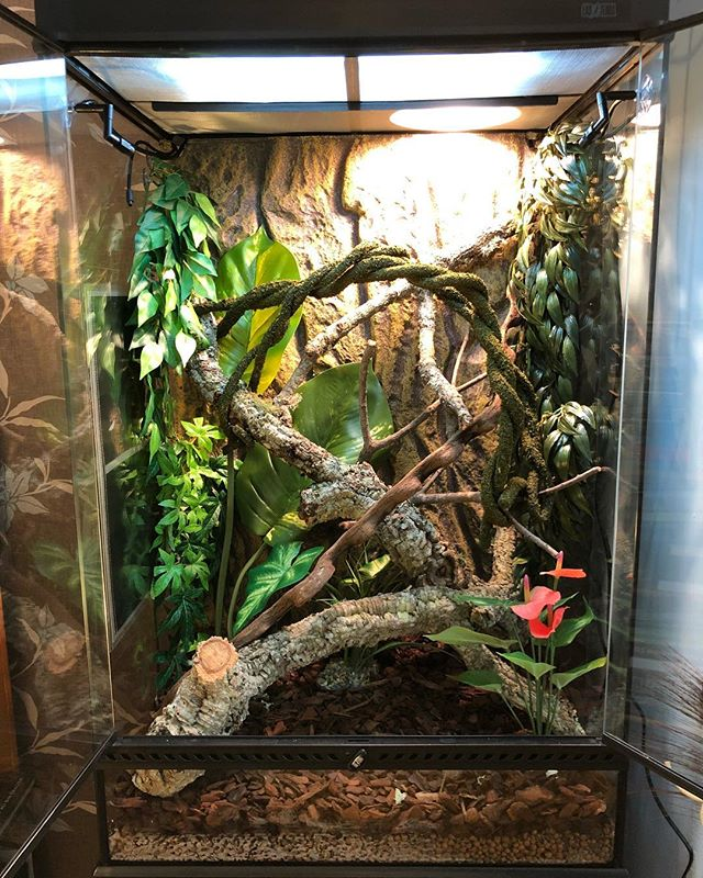 The Vivarium for our latest family member is all ready. Temperature gradients and misting system all working perfectly. Pics to follow once he is all settled in. . . . #vivarium #reptile #reptilesofinstagram #exoterra #pet #rainforest