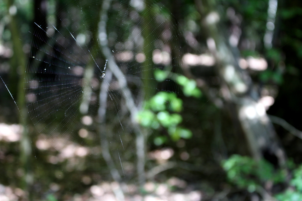 Focusing on a spider web.