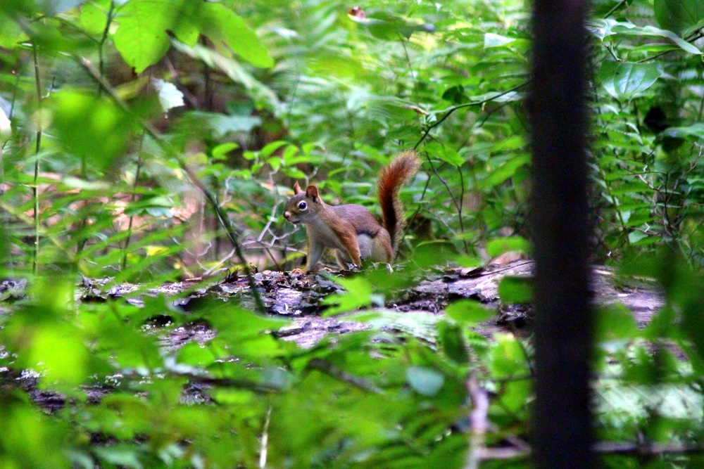 Squirrel friend in the forest.