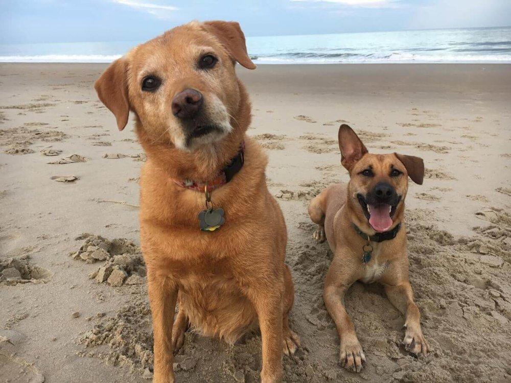 Dewey Dogs
