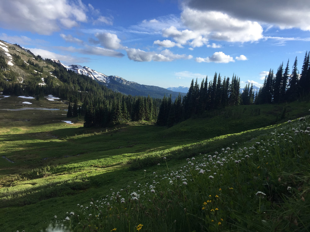Beautiful mountain meadows on the way down.