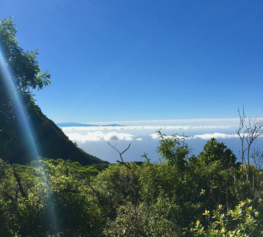 The view after a few hours of hiking - almost above the clouds here. The trail was a bit better, and I regret that I didn't get a better picture of the crater wall (just to the left in this photo). It was massive, and really gave you an idea of the scale of Haleakala.
