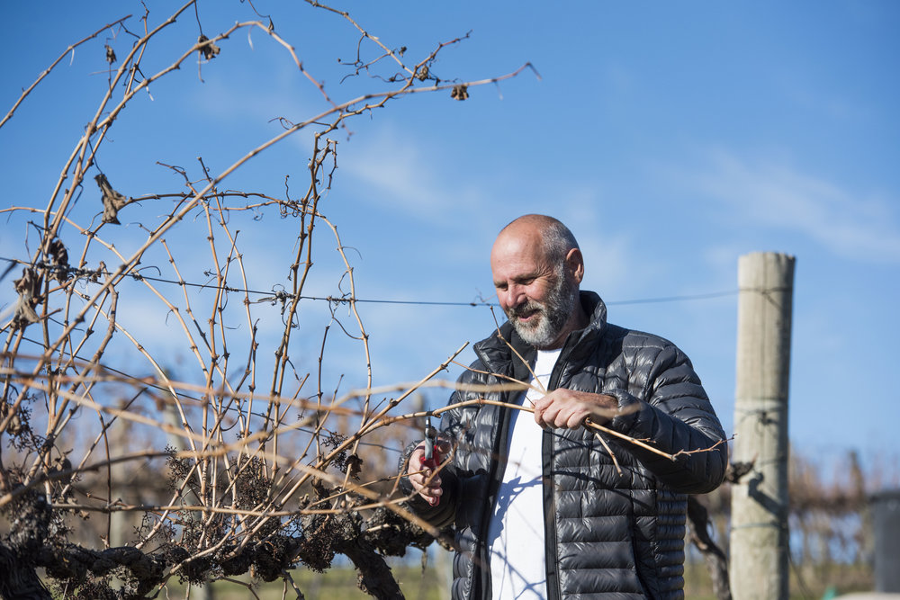 colin millott viticulturist