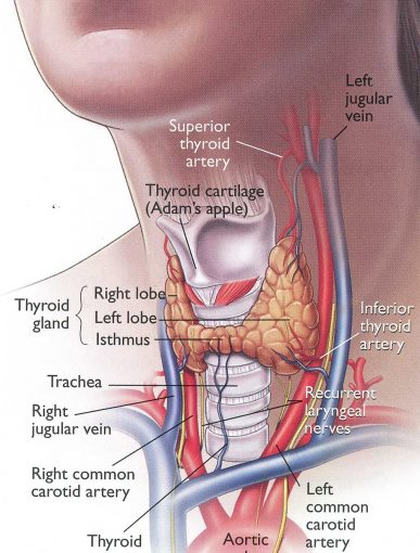 Since January is Thyroid Awareness Month we thought we would talk about your thyroid's roll in your body, what happens when it isn't working correctly, and what you can do to support your thyroid's function, including  Neuro-Structural chiropractic care .  Still have questions? Contact our practice in Santa Clara, CA to schedule a  Complimentary Consultation .