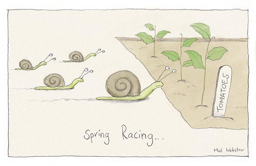 springracing