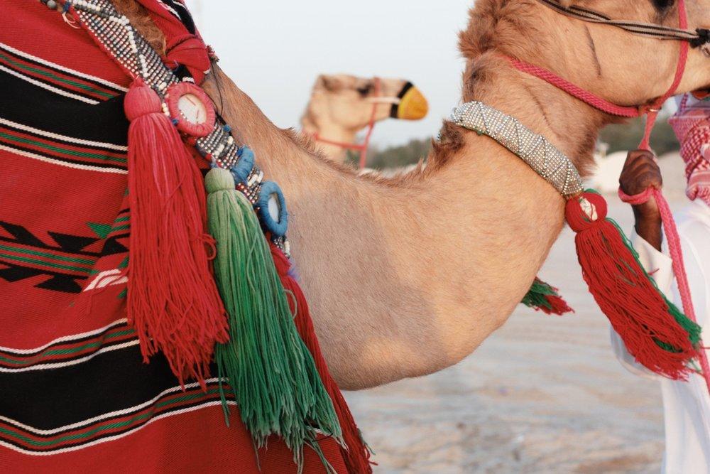3_camel_2048x2048.jpg