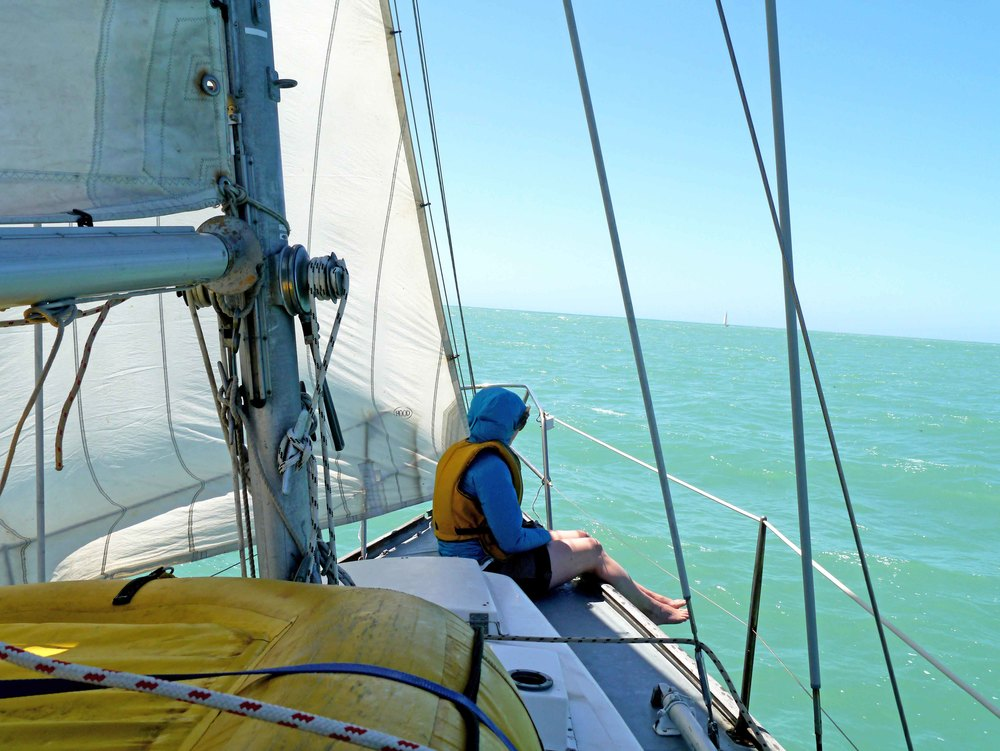 sailing banks peninsula