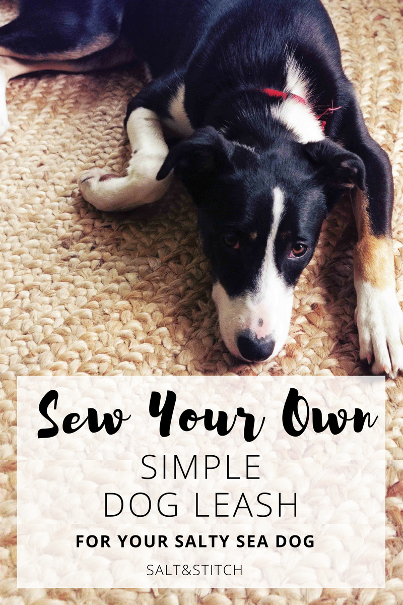 sew your own simple dog leash for your salty sea dog
