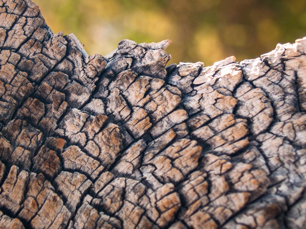 Ancient Bristlecone Bark