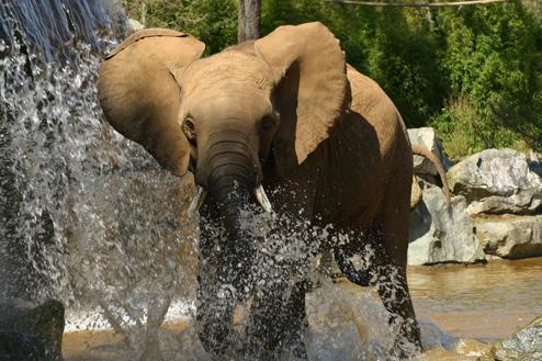 Elephant-Zoo-de-la-Fleche_productDiaporamaImage.jpg