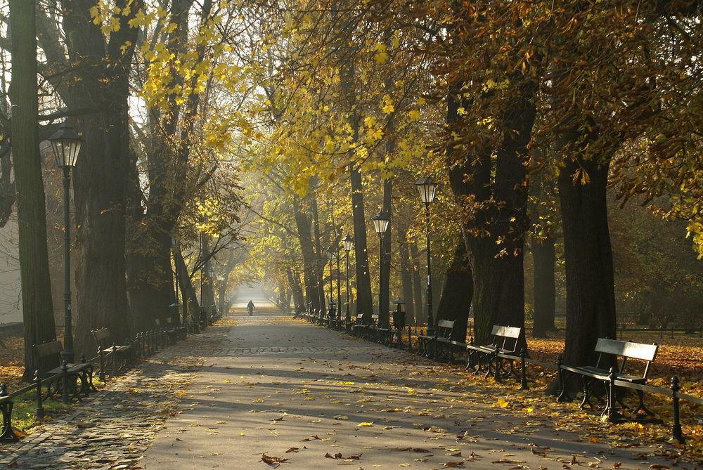 https://commons.wikimedia.org/wiki/File:7004_Planty_krakowskie._Foto_Barbara_Maliszewska.JPG