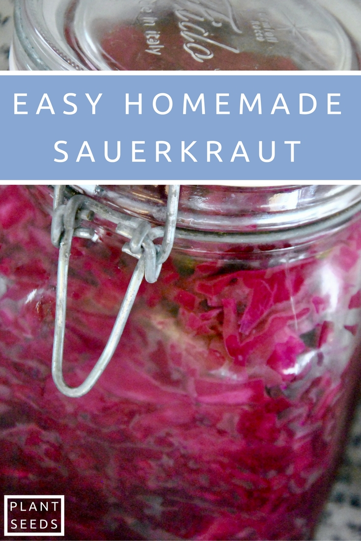 easy-homemade-sauerkraut