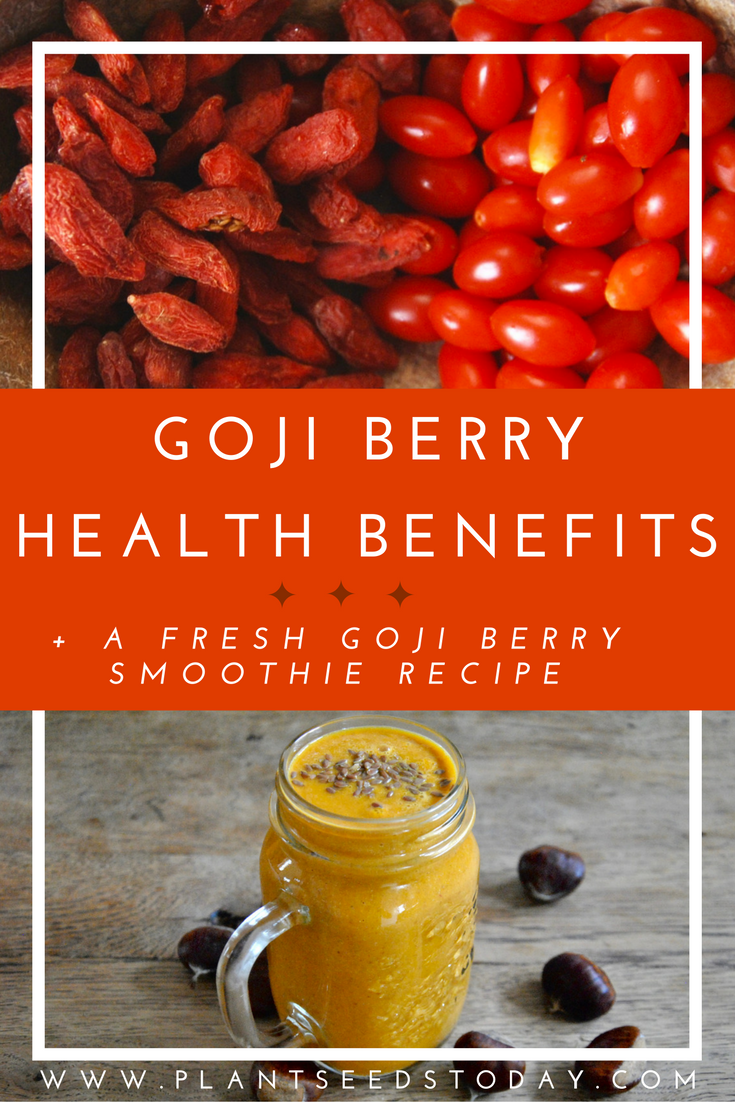 Goji Berry Health Benefits + A Fresh Goji Smoothie Recipe (Raw Vegan Autumn Breakfast)