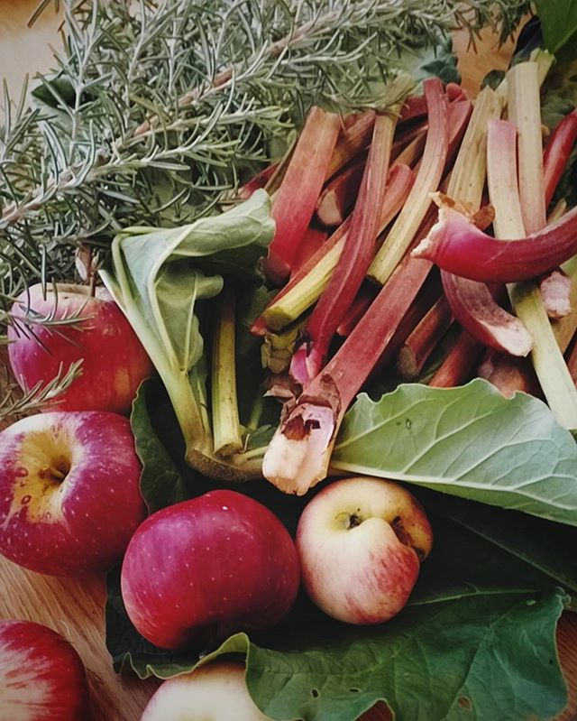 Our friend Martine 🤗 just surprised us with this bounty from her garden. Autumn rhubarb, crisp apples, and oh man, if you could only smell that rosemary... 😍 #fallishere #🍁 #autumnharvest #rosemary #rhubarb #🍎