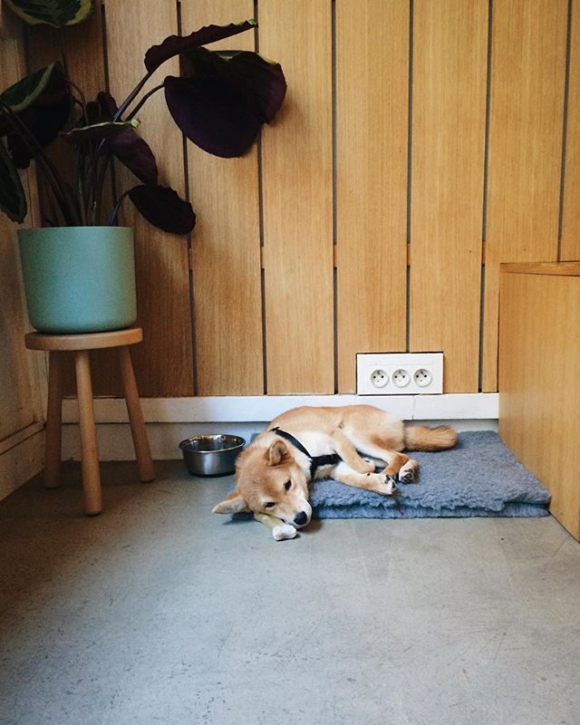 Miss Yoko 🐕 is here today. Swing by to say hi 👋