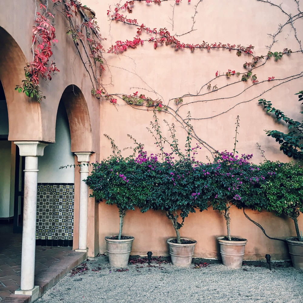 Bougainvillea and vines