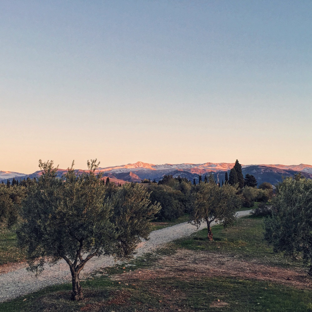 Sunset over Sierra Nevada from wild olive groves in Granada