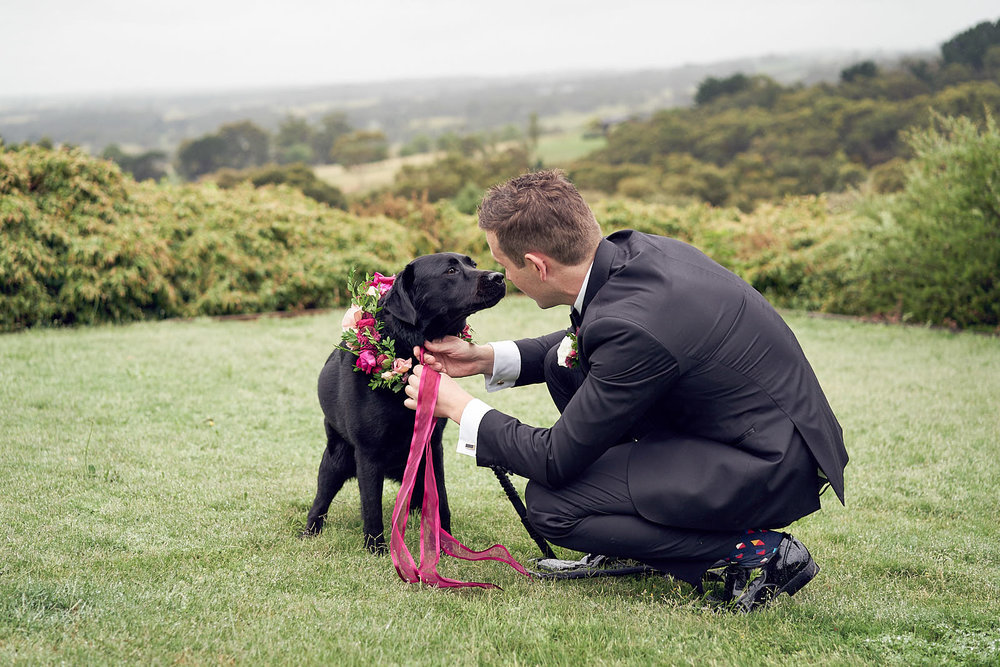 J & S Port Phillip Estate Wedding by Lost In Love Photography. #dog #dogsinweddings