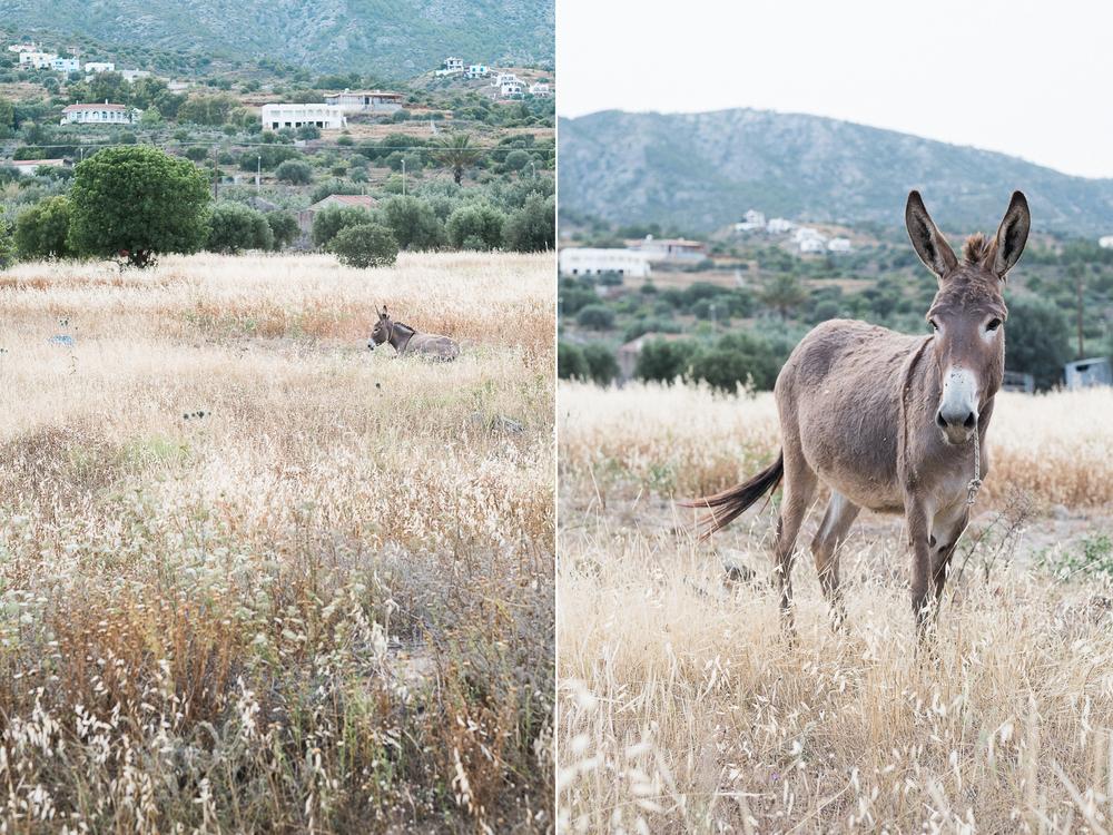 Greece_Dip_5.jpg