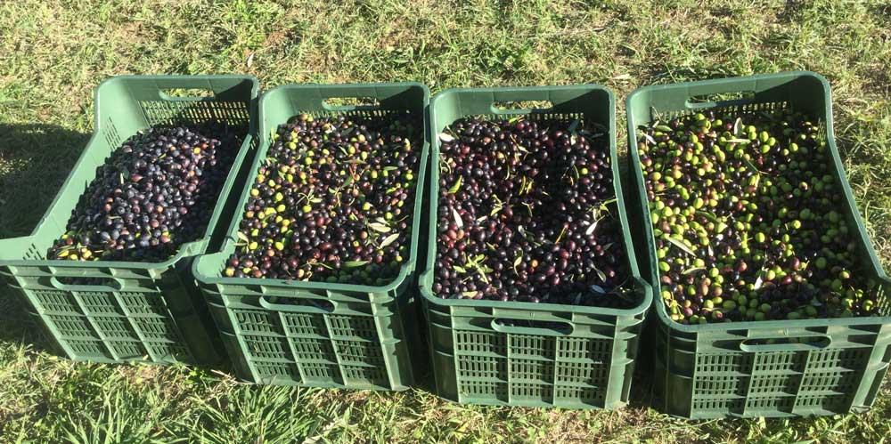 olive-baskets.jpg