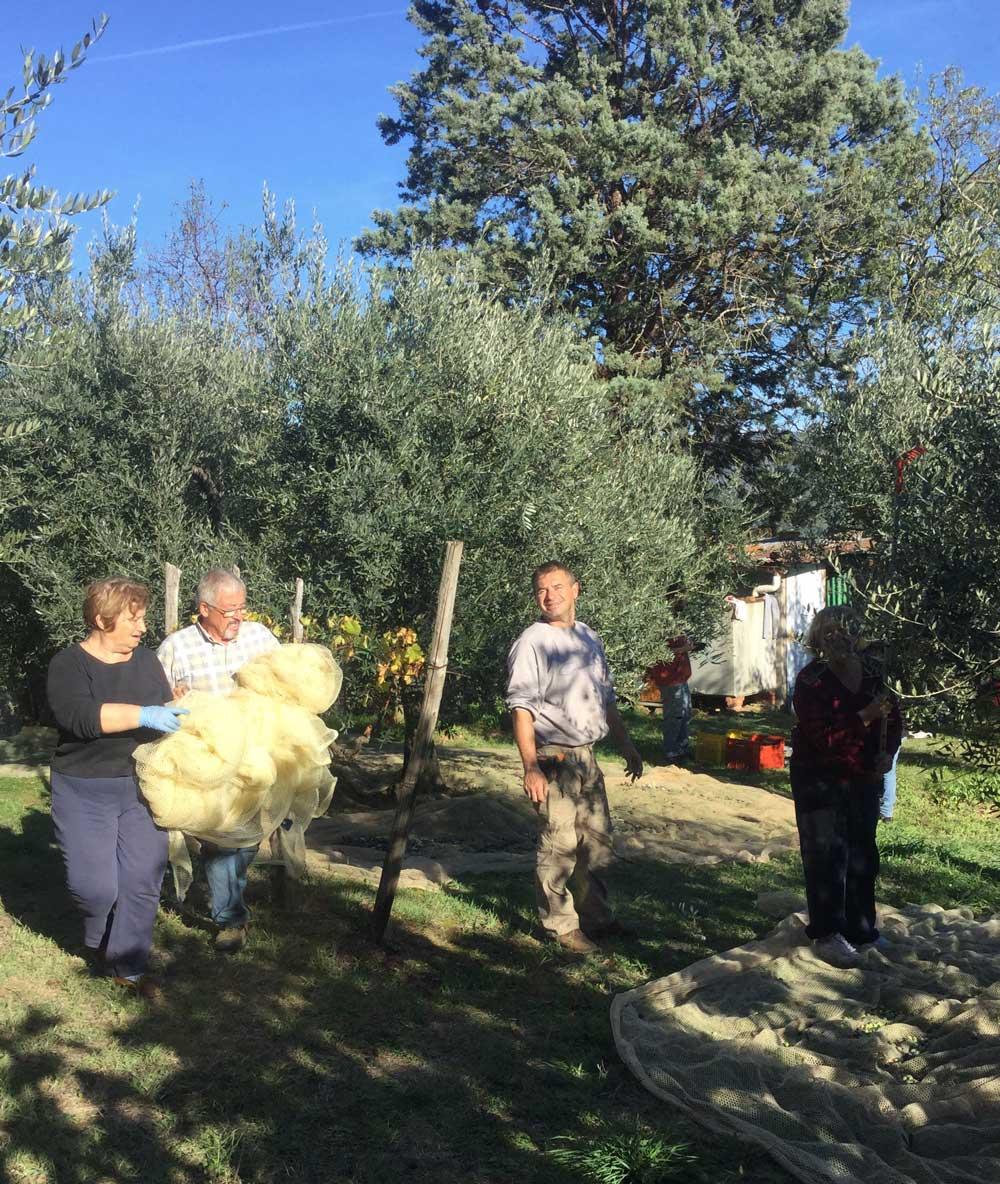carlo-picking-olives.jpg