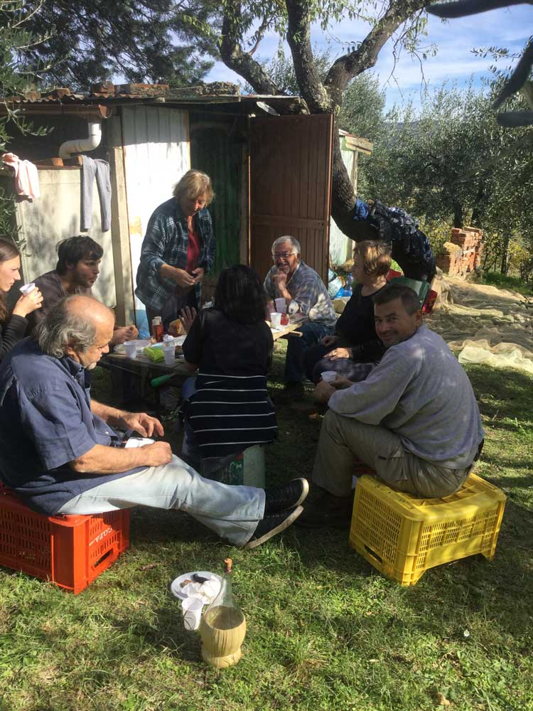 workers-having-lunch-olive-grove.JPG