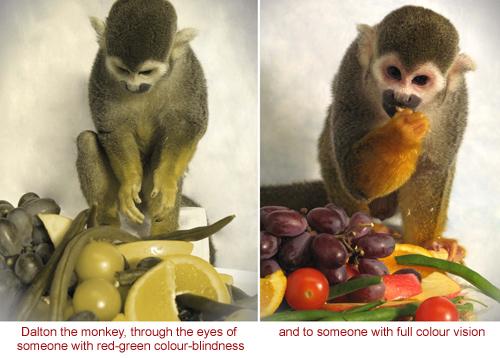 Primate colour vision