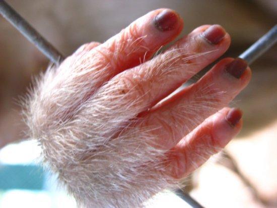 Primate Nails