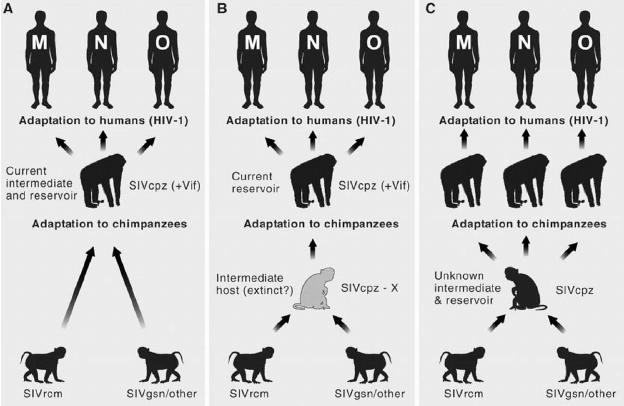 Transmission of SIV from monkeys to apes to humans